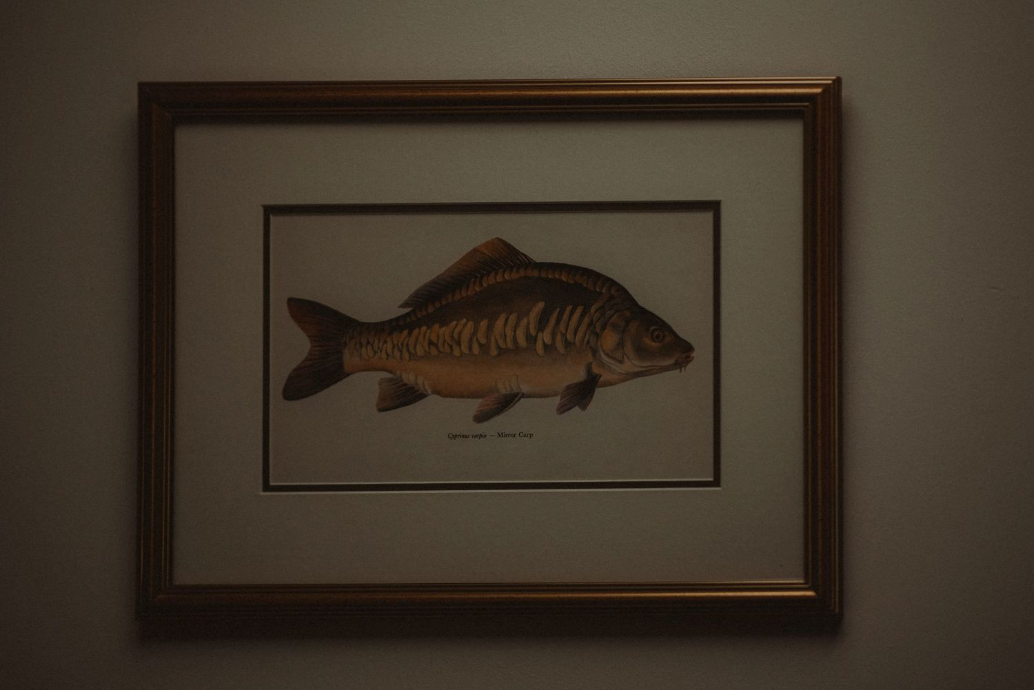 Picture of a fish at Elsick House